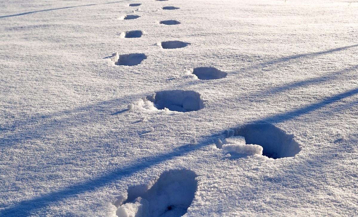 mikroplastik im schnee